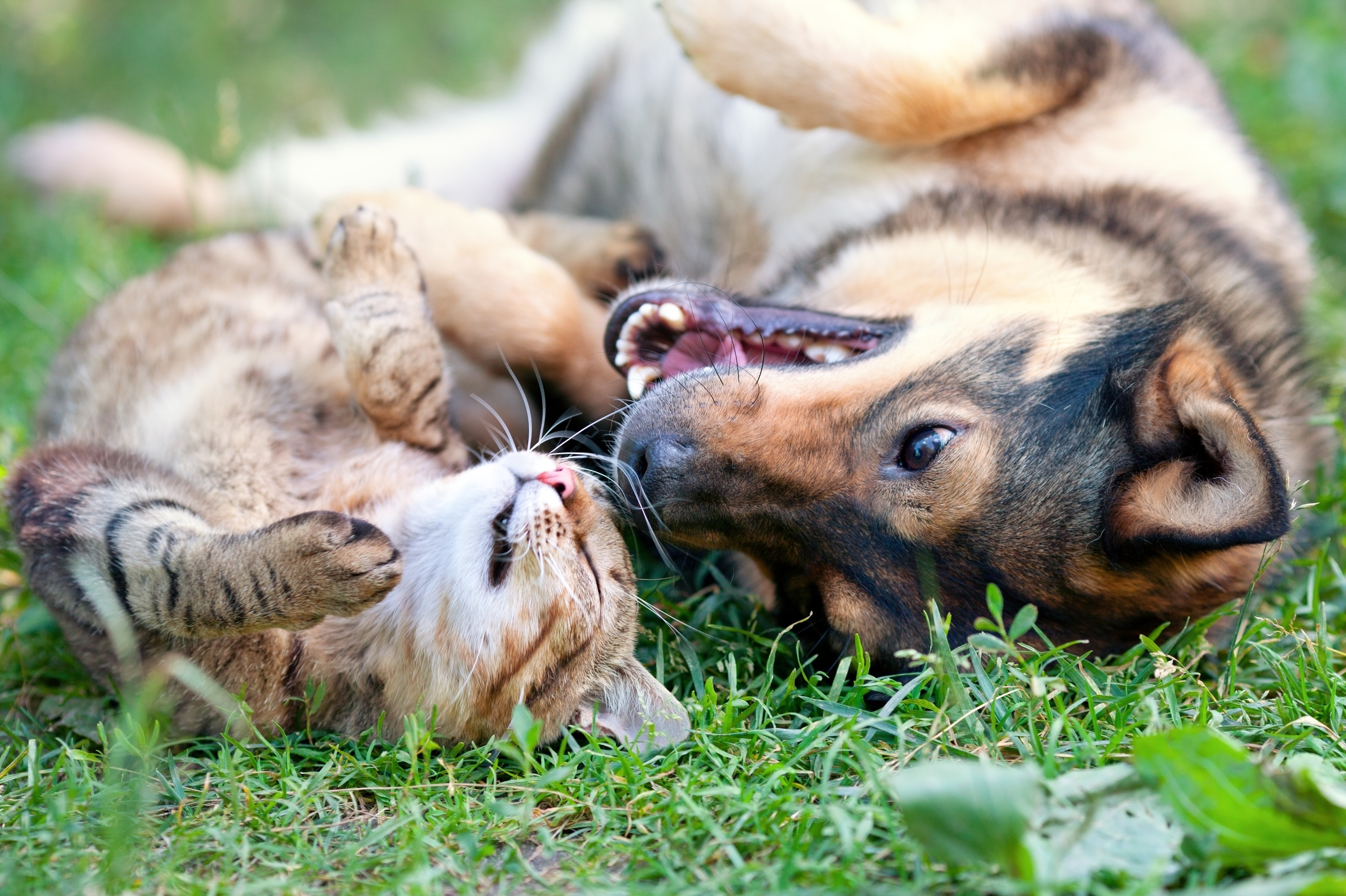 lawn-and-garden-tips-to-keep-pet-safe.jpg