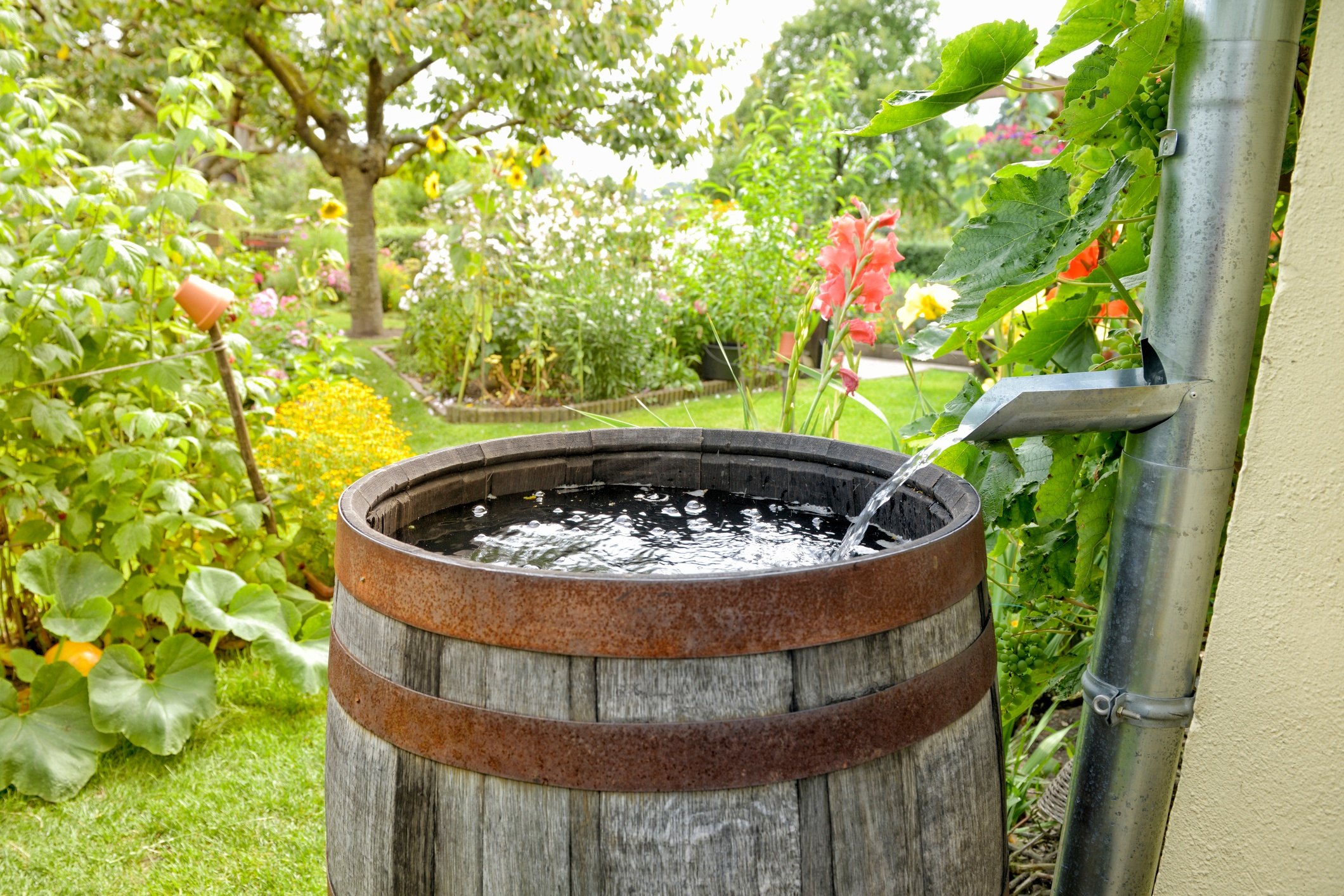 rain-water-conservation-rain barrel.jpg