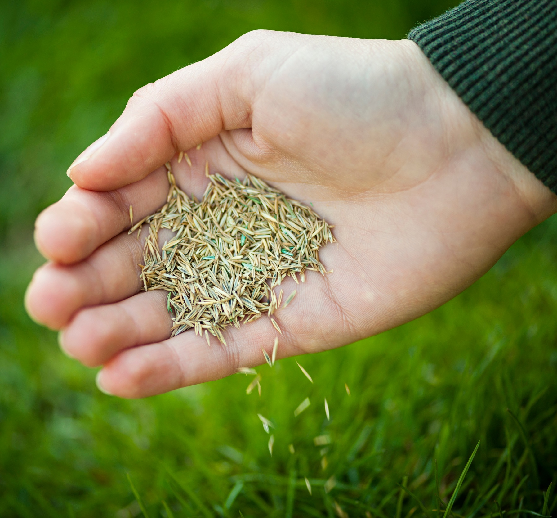 tall-fescue-grass-cool-weather-grass.jpg