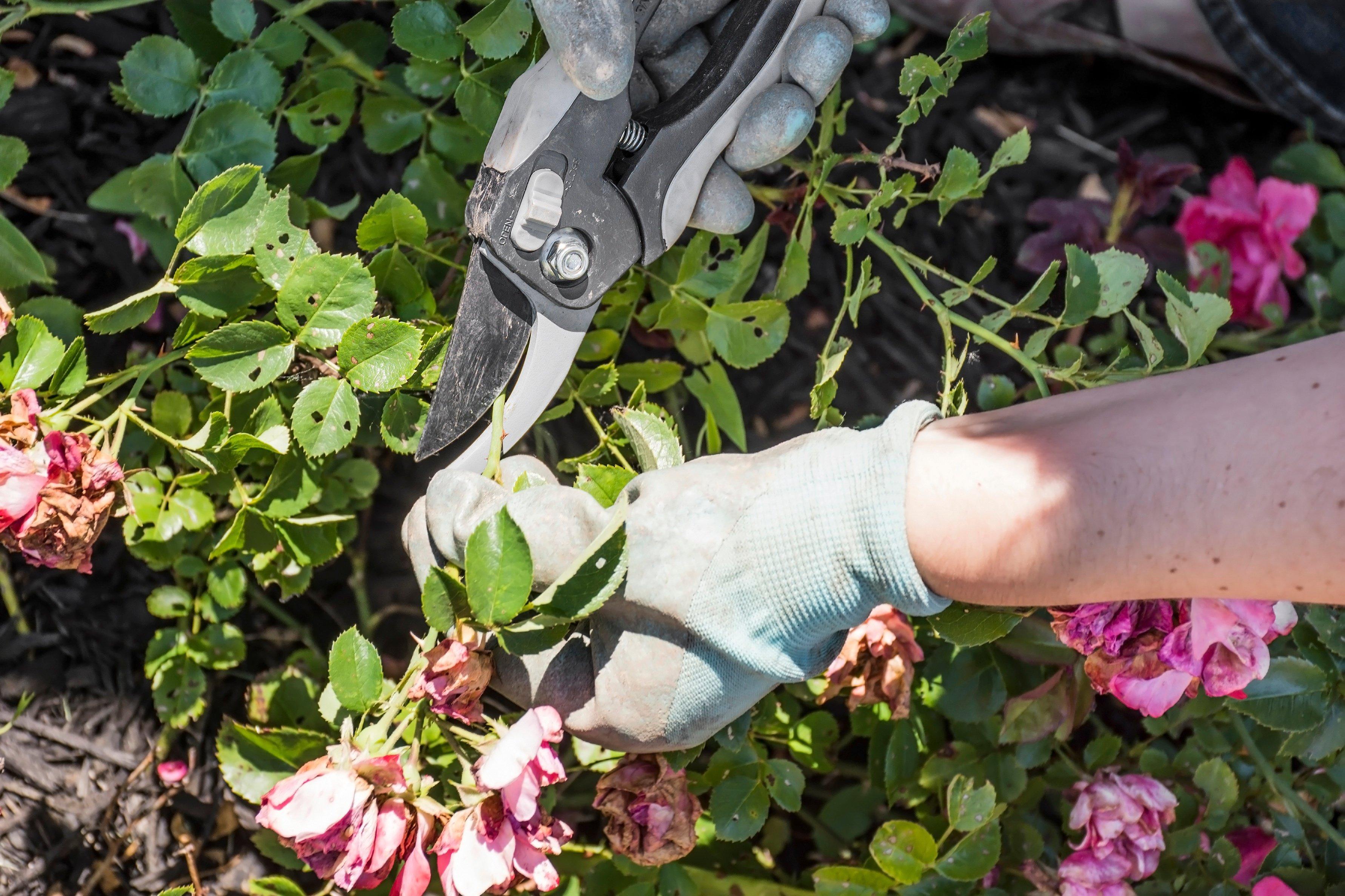 when-to-trim-flowering-shrubs.jpg