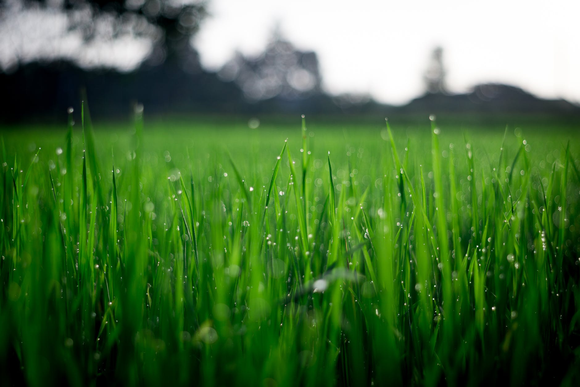 lawn-care-companies-North-Olmsted