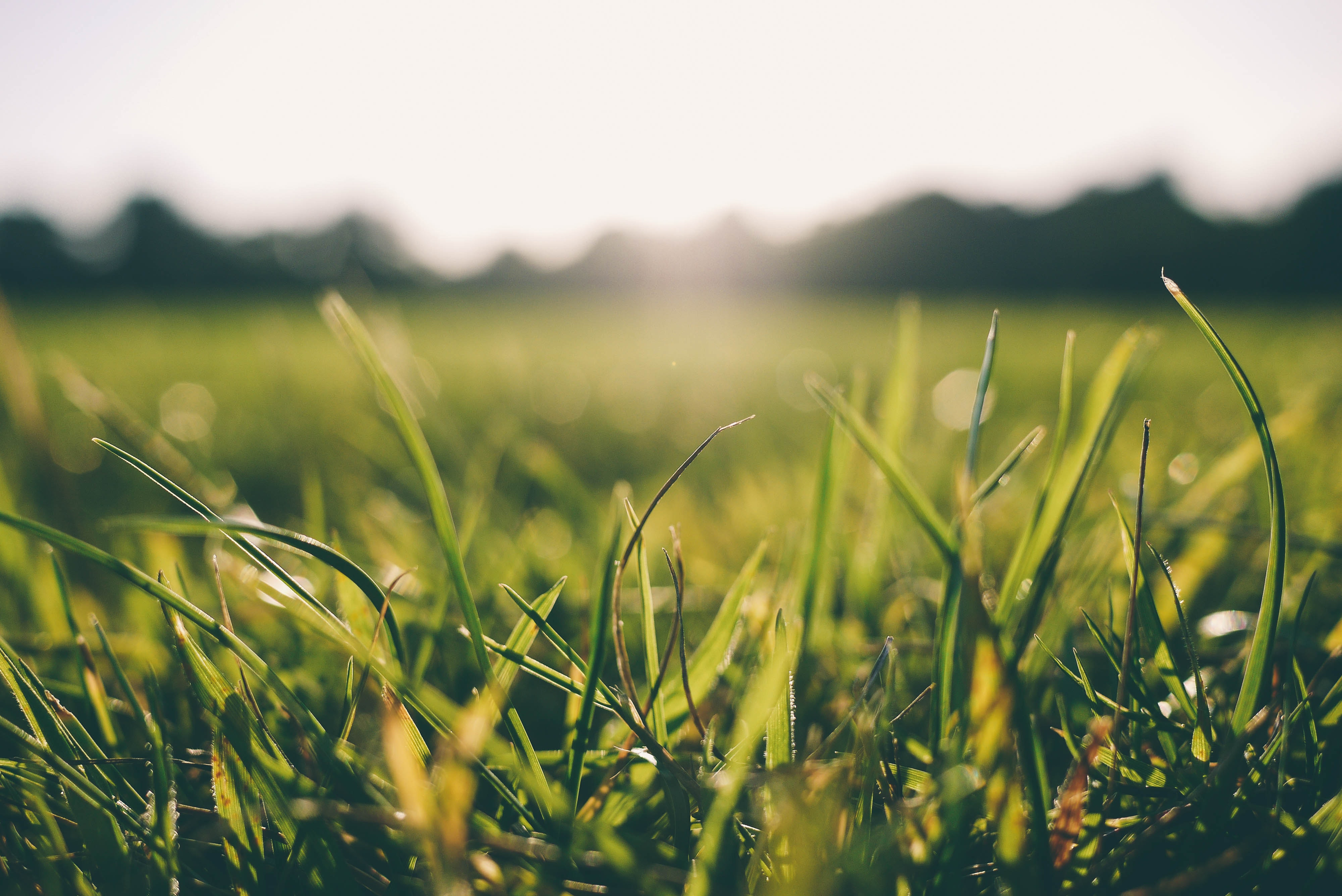 tall-fescue-grass-seed