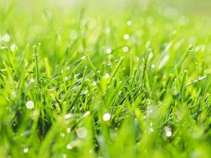 wet-lawn