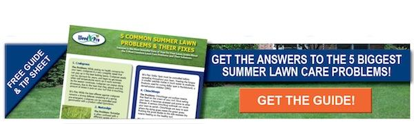 Five Summer Lawn Problem Guide