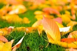 Fall_Lawn