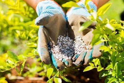 Fertilizing_Your_Lawn