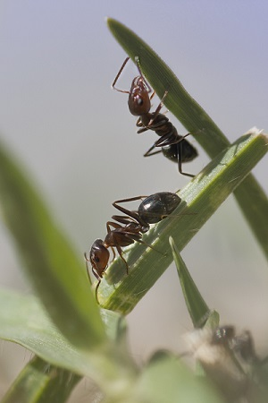 Insects_in_Lawn