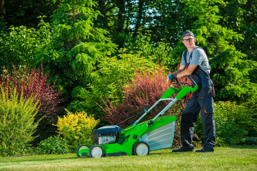 Top 10 Lawn Care Fun Facts