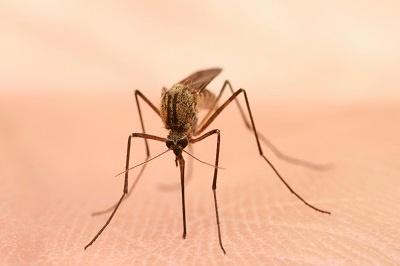 Mosquito_Control-1