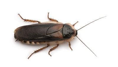 Pest_Control-1