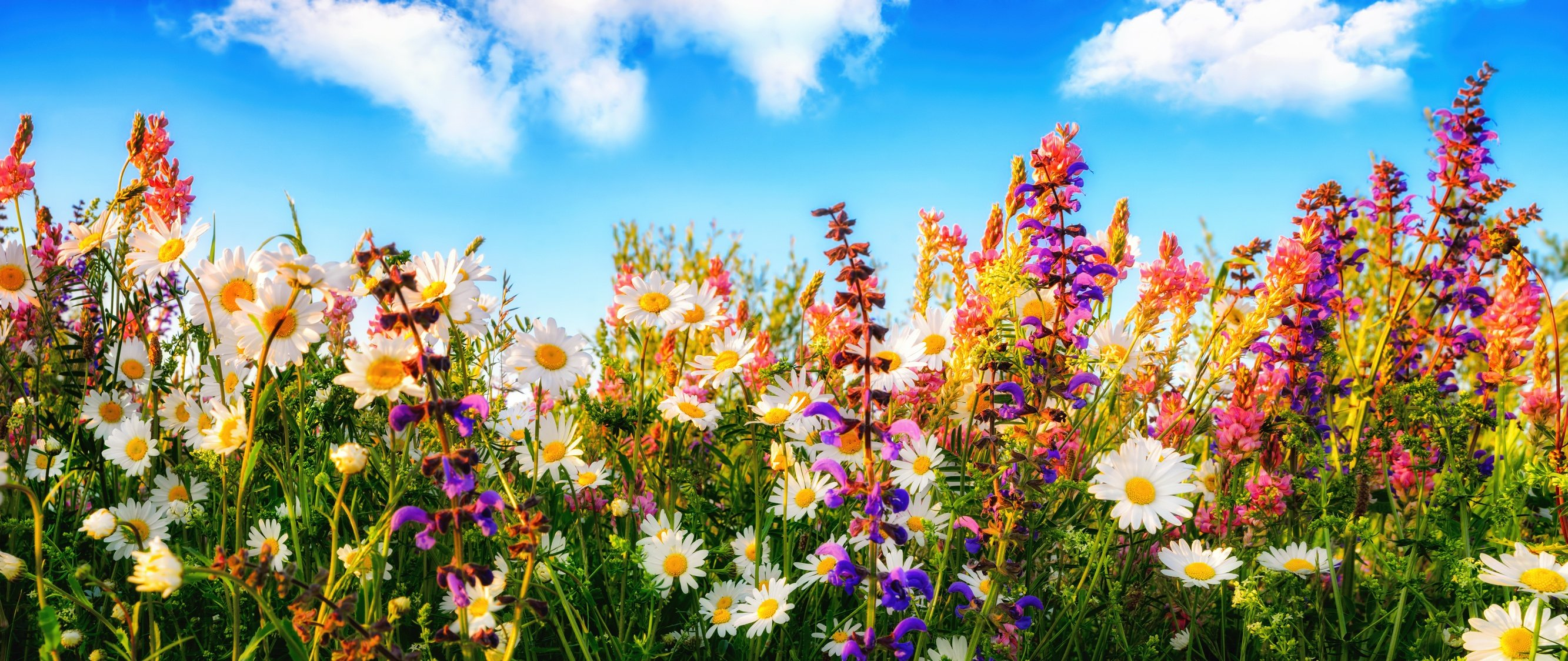 Spring Planting The Best Annuals And Perennials For Ohio