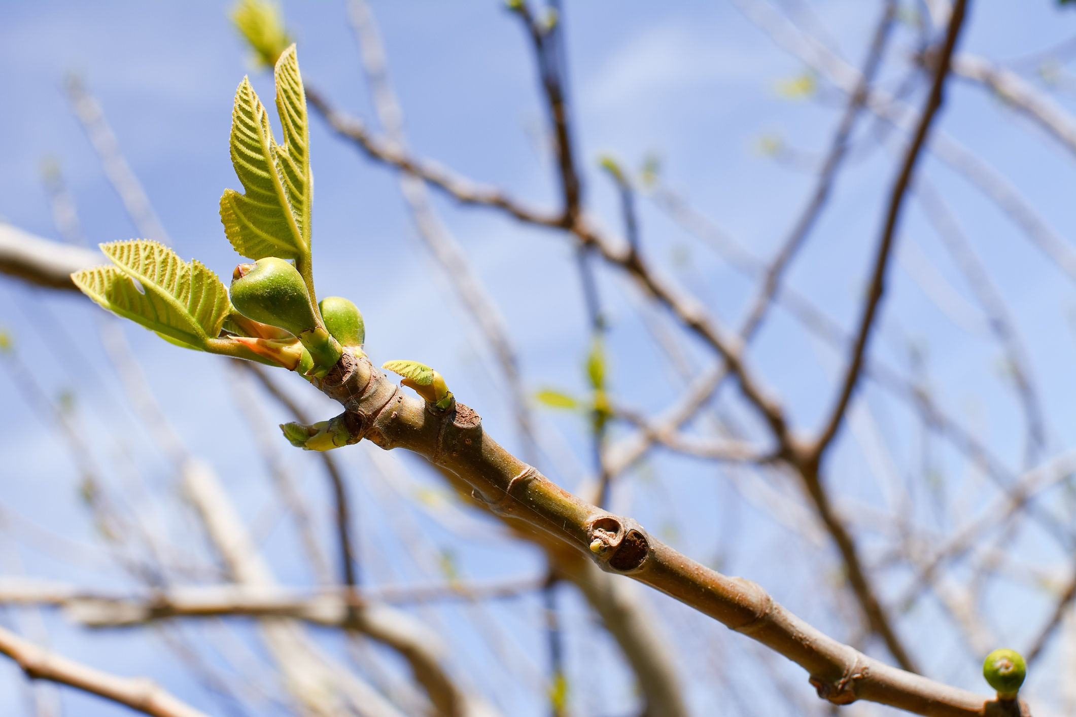 Spring-Lawn-Care-Budding-Branch.jpg