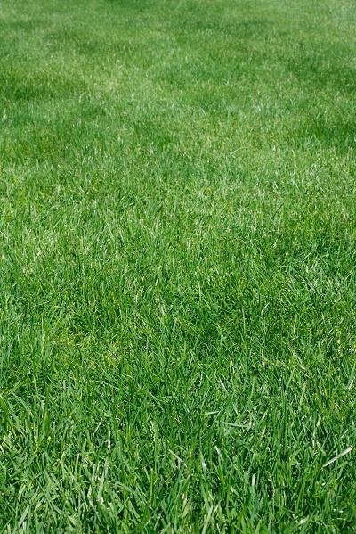 heat_stress_in_lawns