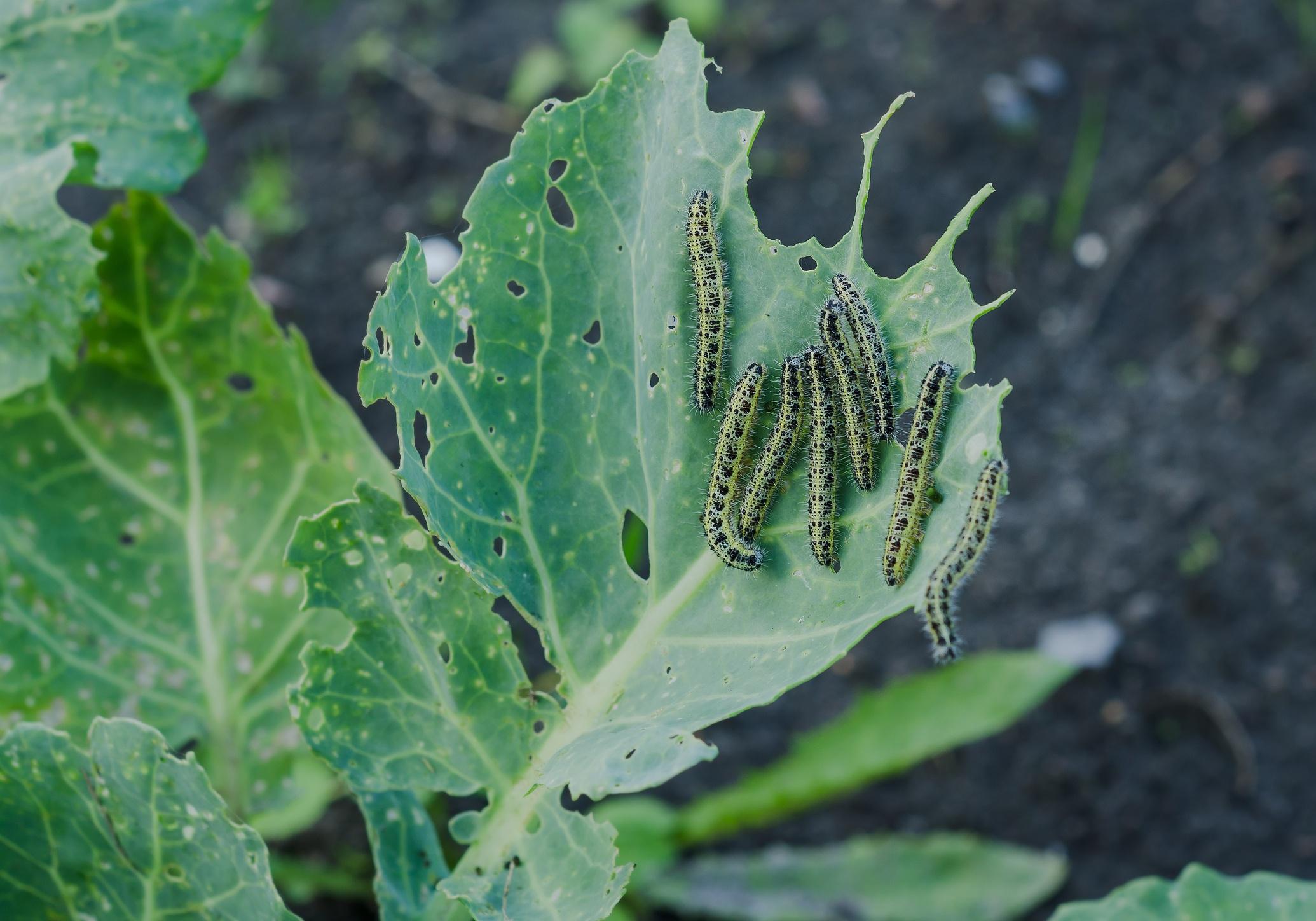 pests in the garden.jpg